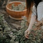 thumbnail - artikel - 7 planten die het goed in de zon en droogte doen