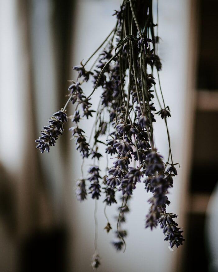 planten-die-het-goed-doen-in-zon1