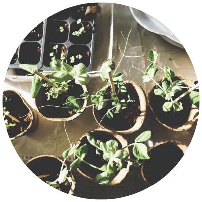 11x makkelijke kruiden in de tuin kweken