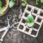 Tuinkalender checklist: alle tuinklussen per maand