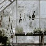 Tuinkalender november: alle tuinklusjes op een rij