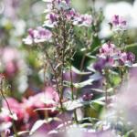 Een overzicht van alle vaste planten soorten? Bekijk hier