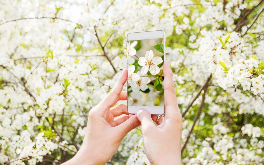 Planten herkennen? Onze top 5 planten-herkenners (apps)