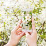 Planten herkennen? Onze gratis top 5 planten-herkenners (apps)