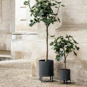 tuin-bomen-2