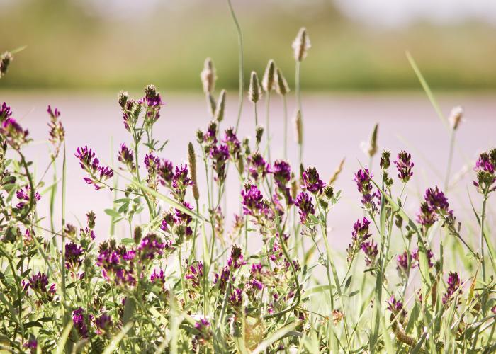 12 originele voorjaarsbloeiers voor het ultieme lentegevoel