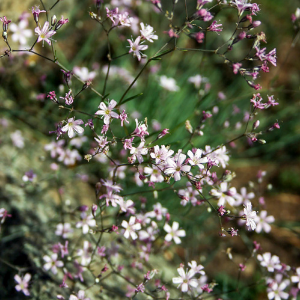 voorjaarsbloeiers-plant1 (1)