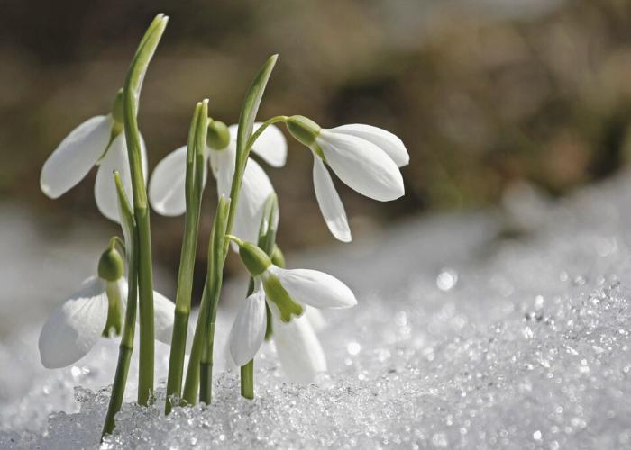 thumbnail-tuinkalender-februari (1)