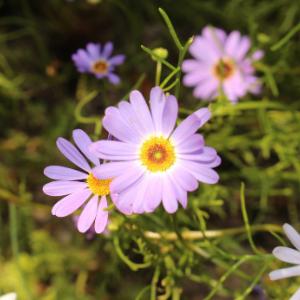 voorjaarsbloeiers-plant5
